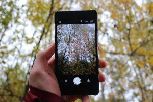 Mit einem Mobilfon werden Bäume gefilmt.